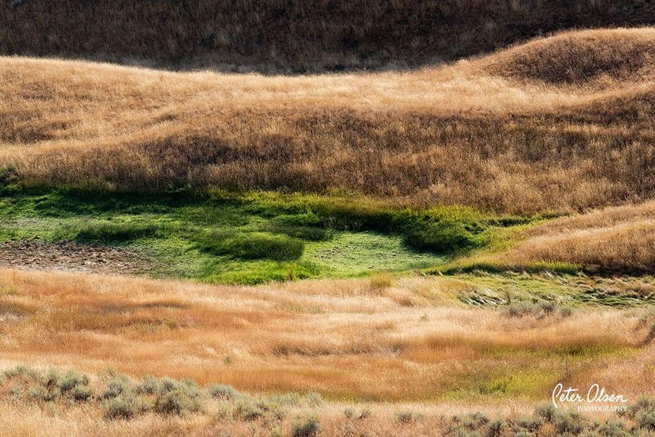 Kamloops Abstract Photography - 9