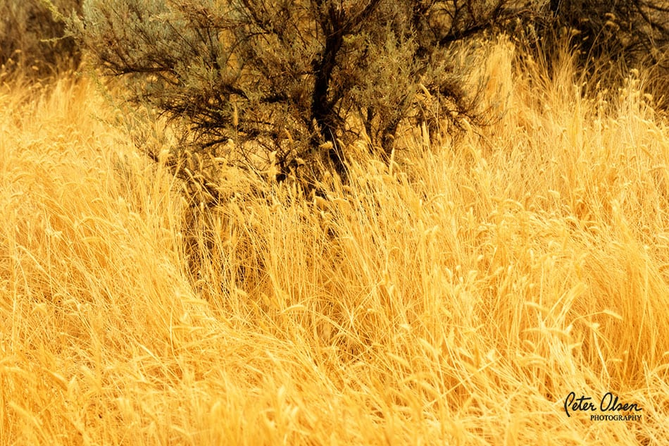 Kamloops Abstract Photography - 11
