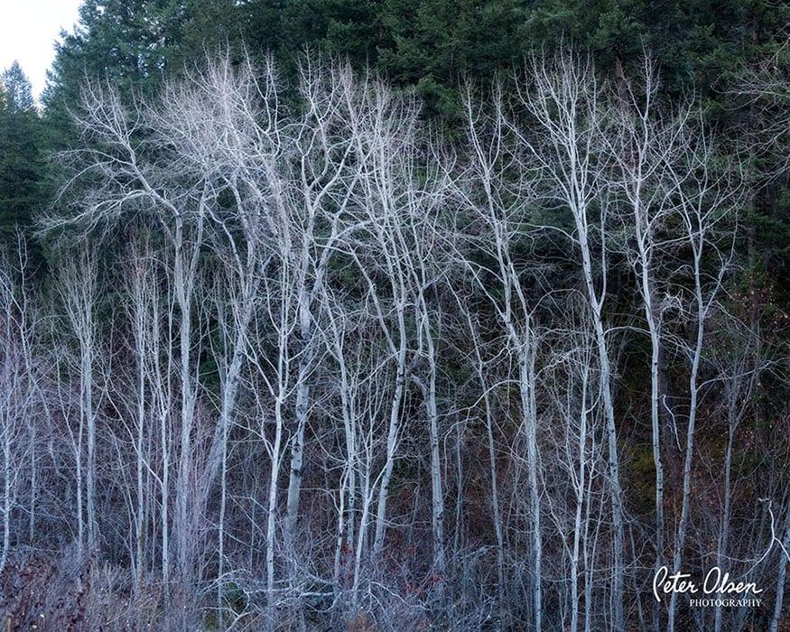 Kamloops Abstract Photography - 14