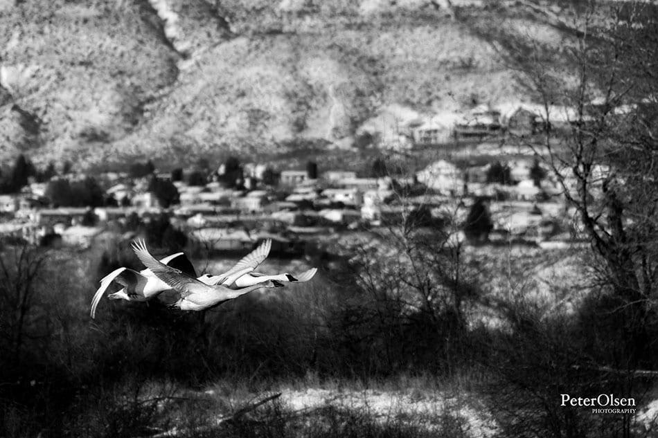 Kamloops Abstract Photography - 23