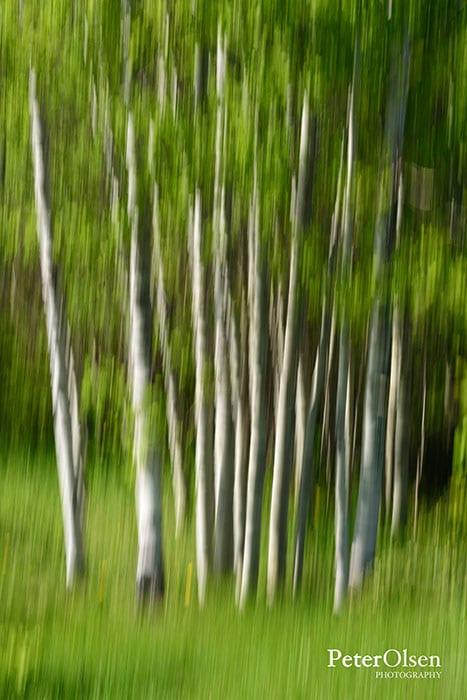 Kamloops Abstract Photography - 24