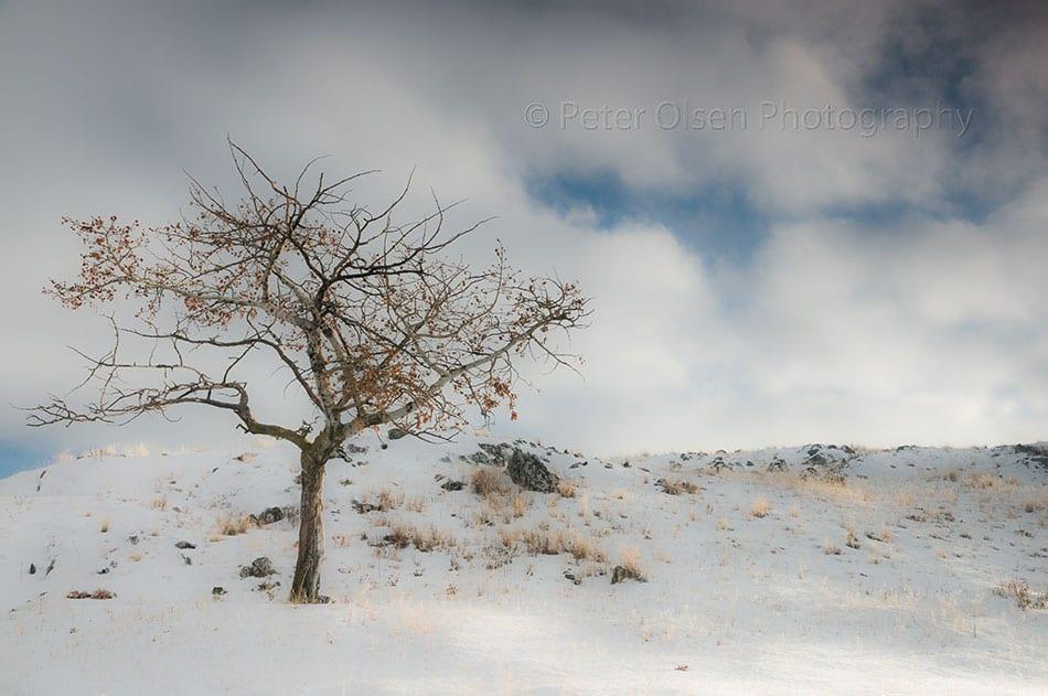 Kamloops Abstract Photography - 84