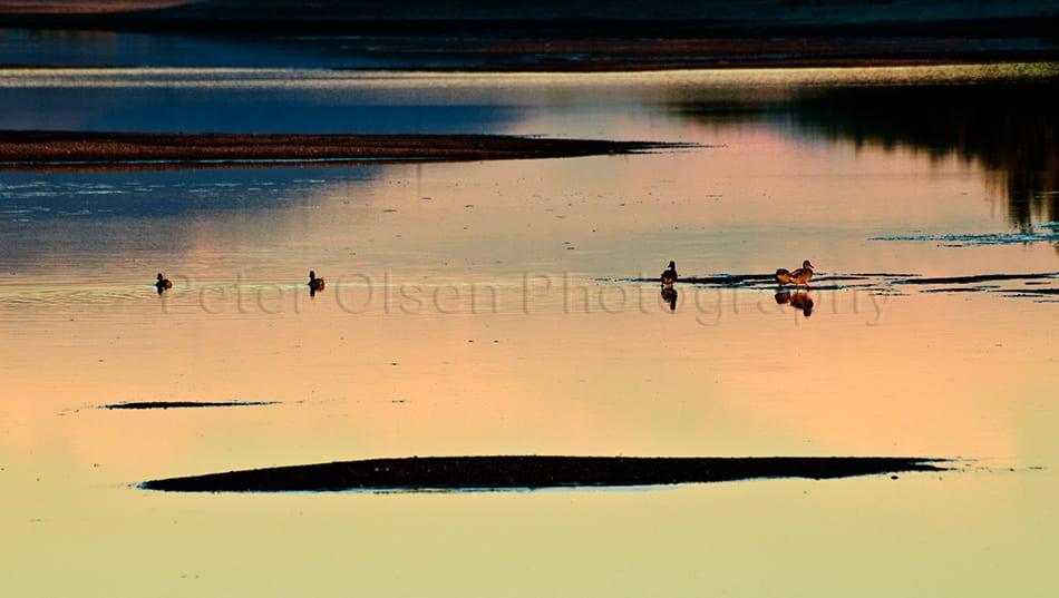 Kamloops Abstract Photography - 86