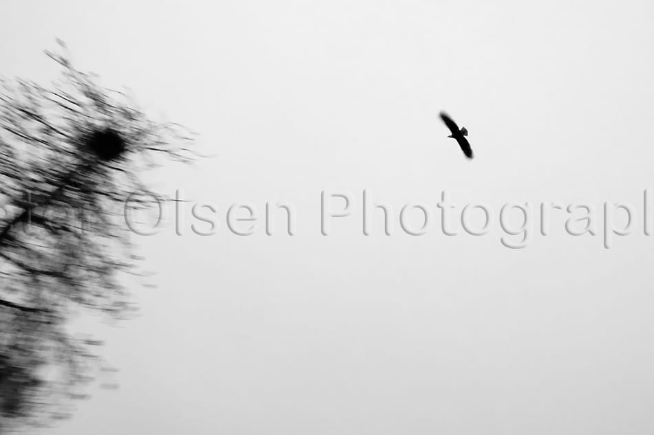 Kamloops Abstract Photography - 150