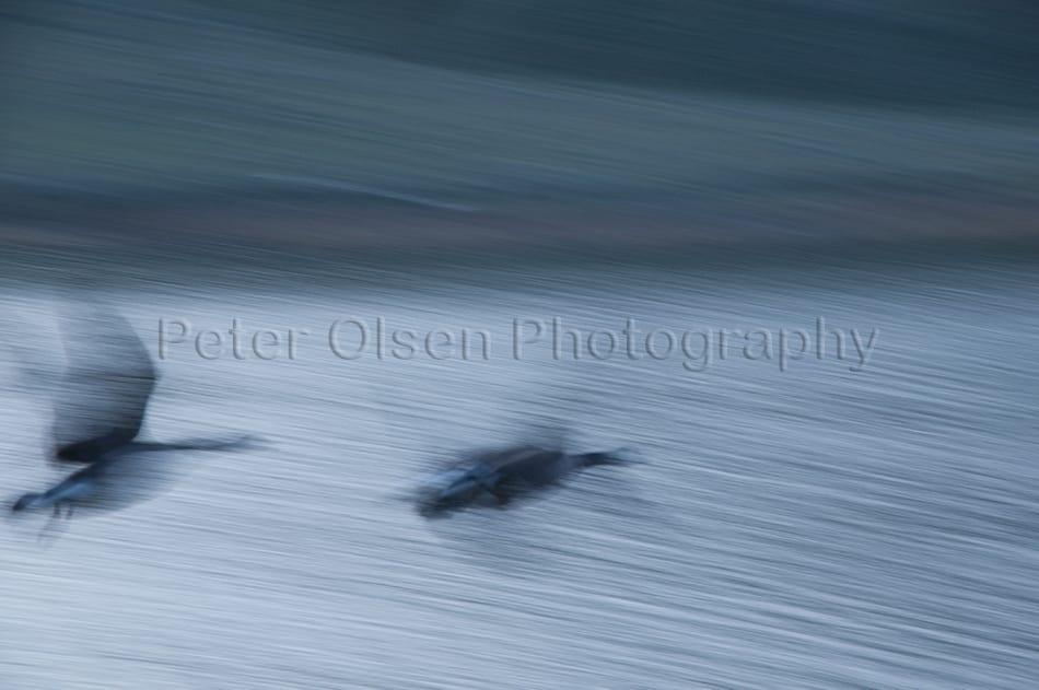 Kamloops Abstract Photography - 151
