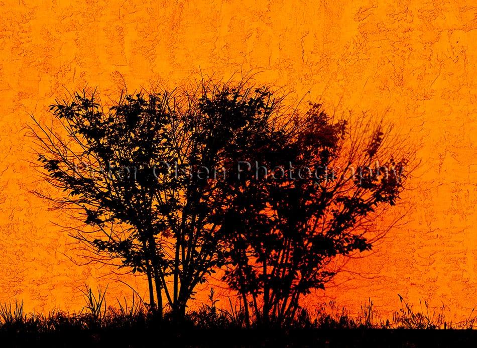 Kamloops Abstract Photography - 153