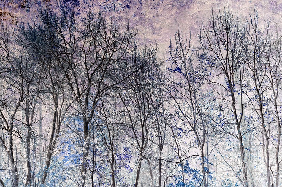 Kamloops Abstract Photography - 167