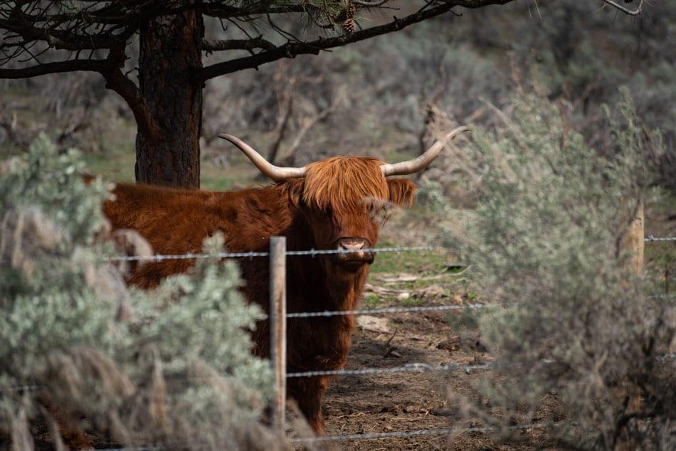 Kamloops Fauna Photography - 10