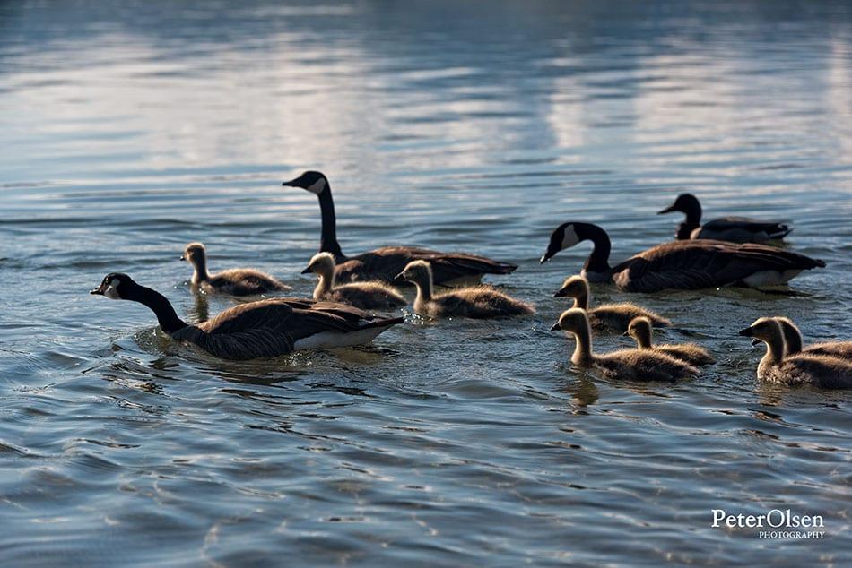 Kamloops Fauna Photography - 73