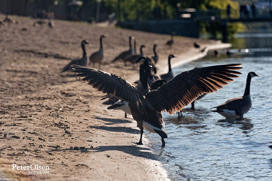 Kamloops Fauna Photography - 74