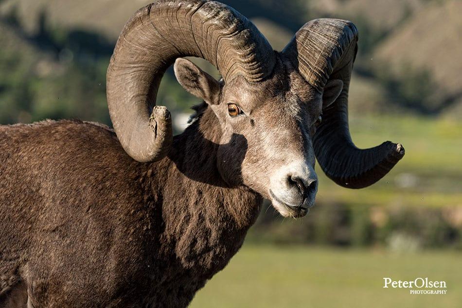 Kamloops Fauna Photography - 75