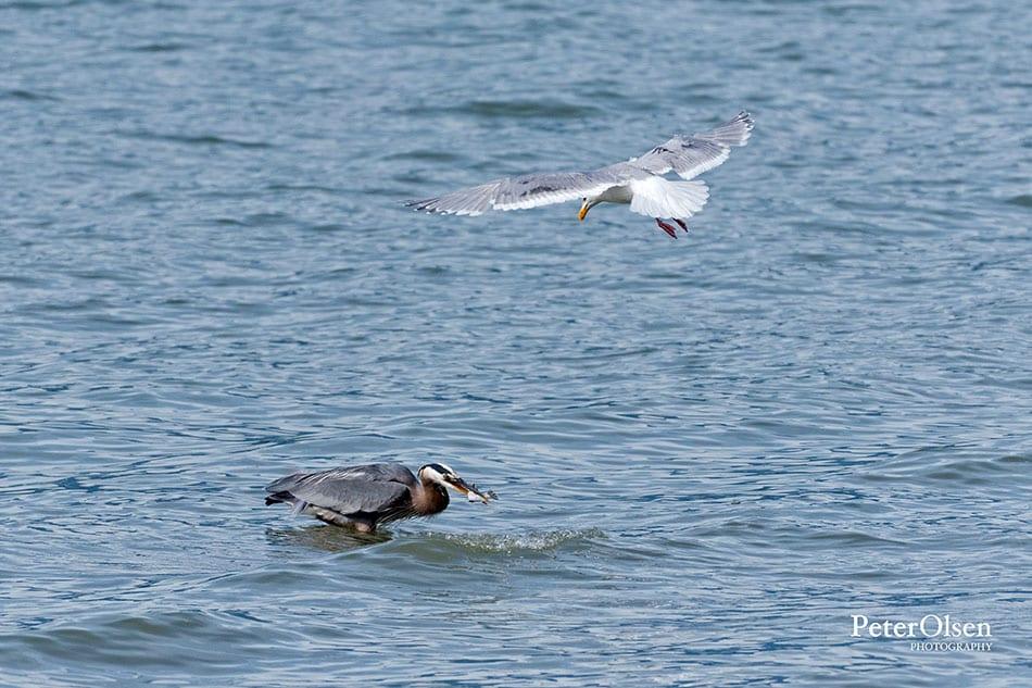 Kamloops Fauna Photography - 76