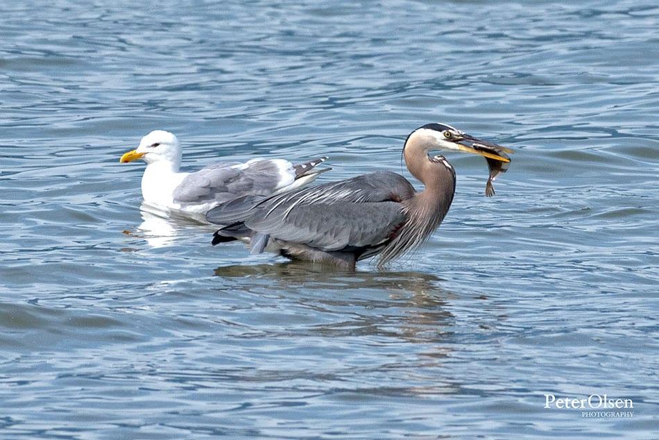 Kamloops Fauna Photography - 77