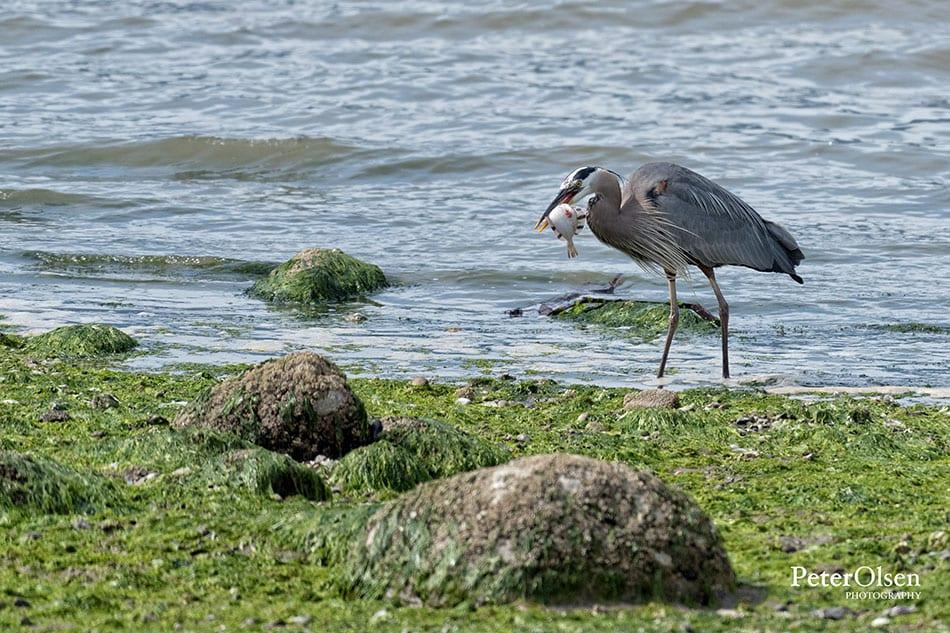 Kamloops Fauna Photography - 78