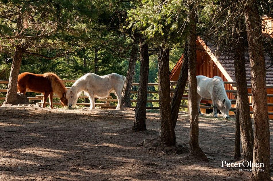 Kamloops Fauna Photography - 79