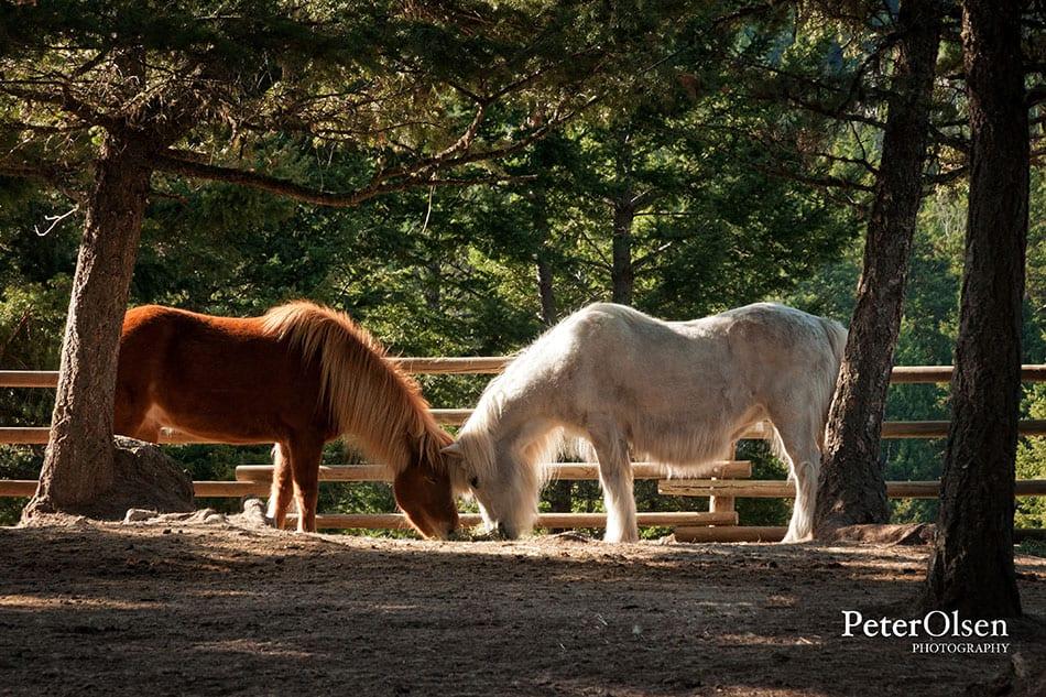 Kamloops Fauna Photography - 80