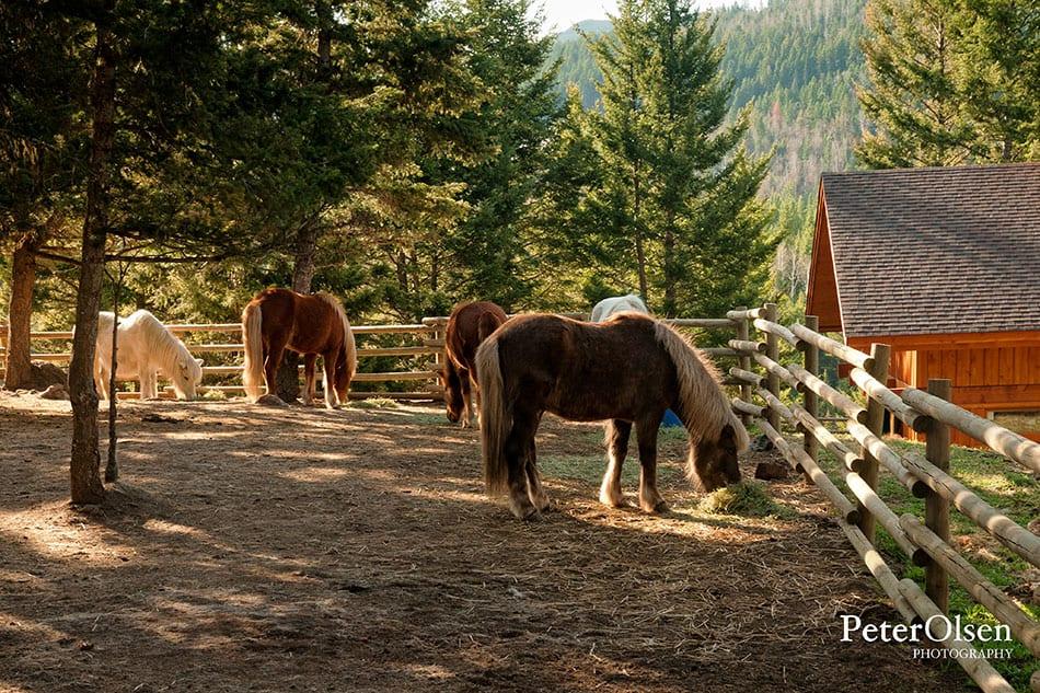 Kamloops Fauna Photography - 81