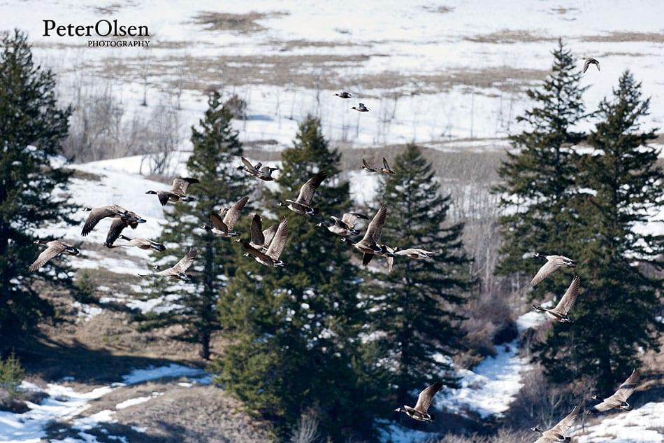Kamloops Fauna Photography - 82