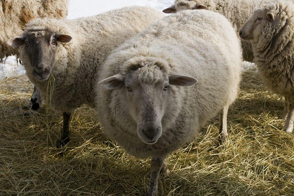 Kamloops Fauna Photography - 241