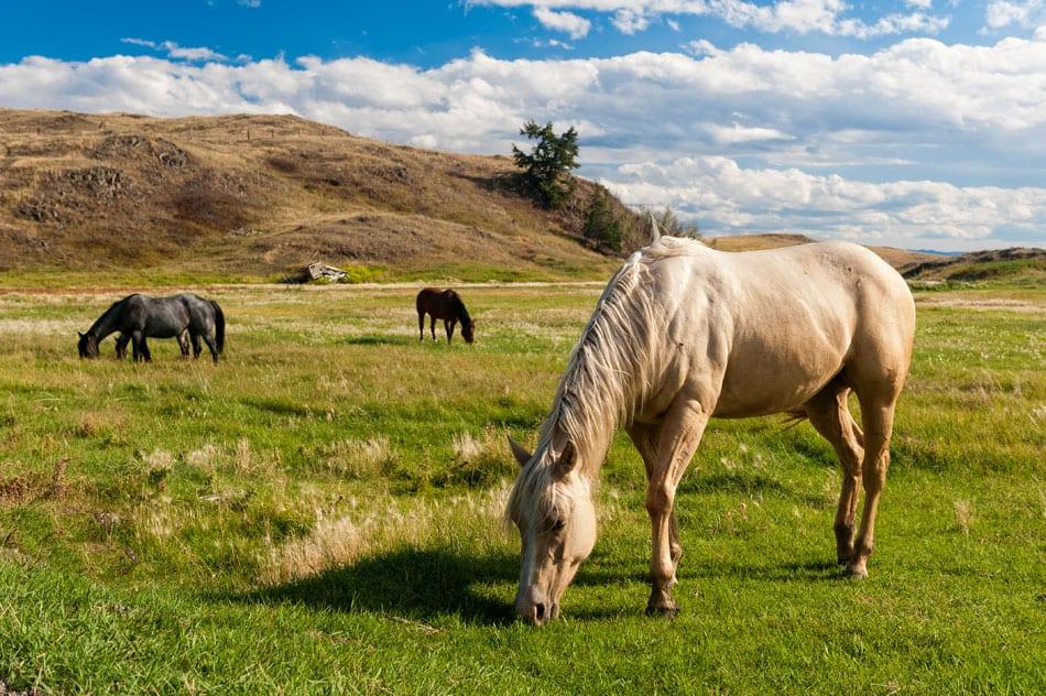 Kamloops Fauna Photography - 1