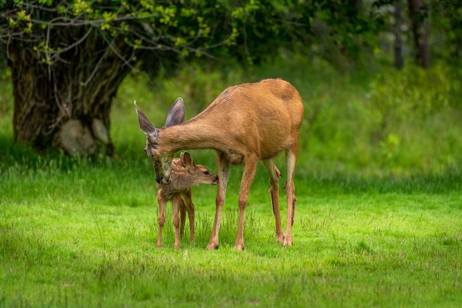 Kamloops Fauna Photography - 2