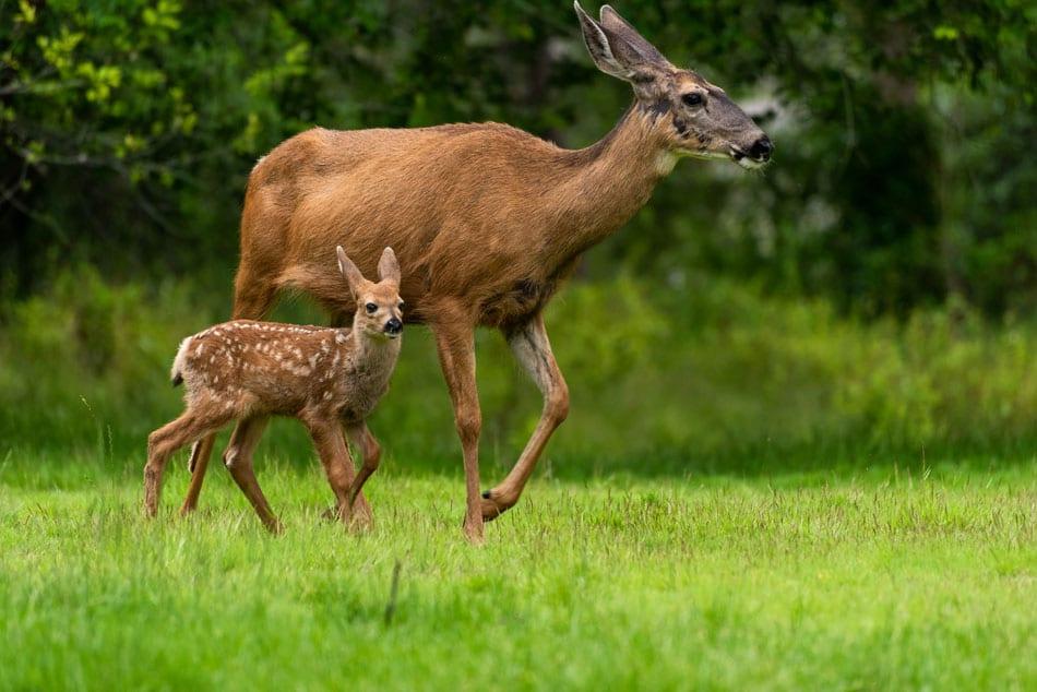 Kamloops Fauna Photography - 3